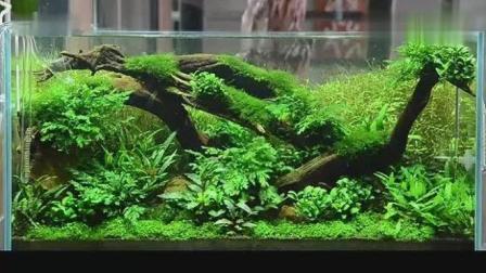 家居水景丨天野尚水草造景讲座190cm水景制作过程