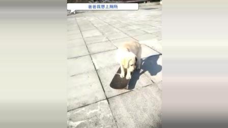 这只狗狗快要成精了, 居然知道蹲马桶上厕所, 还带了卫生纸, 真逗