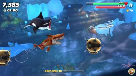 饥饿鲨世界: 原子鲨会被这凶猛的杀人鲸吃掉吗?