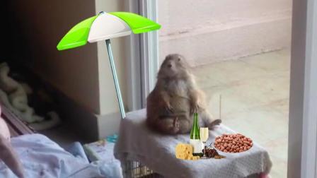 网友下班回家后 看到土拨鼠坐在窗边晒太阳 小表情萌化了