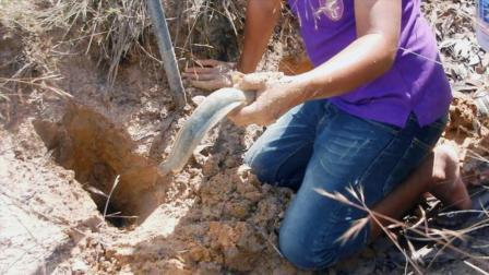 农村大叔带儿子在野外挖螃蟹, 看见两个神秘的大洞, 挖开一看不得了