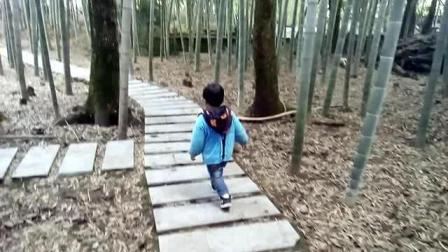 小网红: 笑笑鸟漫步在小竹林中