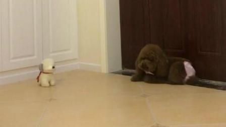 主人出门以后, 狗狗在家的一举一动让人心酸