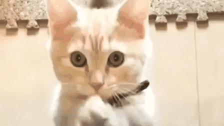 20个超可爱超治愈的猫咪视频, 看完你会开心的!