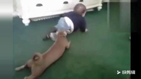 笑死人  婴儿和汪星人相互模仿到停不下来