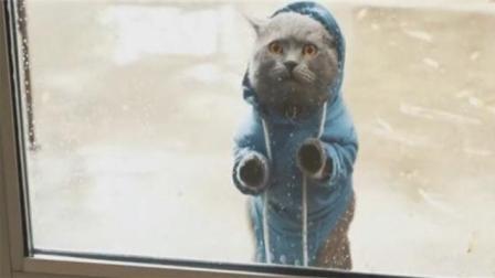猫咪离家出走, 三次求收养被拒露宿街头, 后悔了吧?