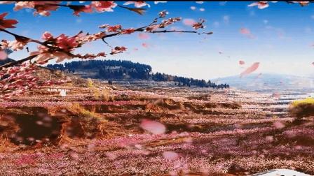 """【为家乡推介】走进史圣左丘明故里""""肥城"""", 赏中国最美桃花海"""