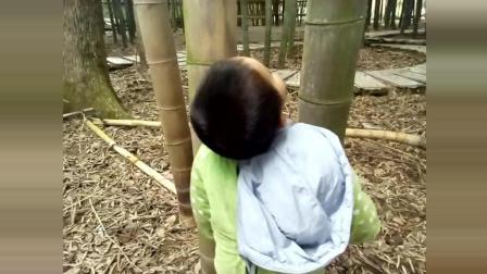 小网红: 笑笑鸟好调皮, 就是一个淘气宝宝