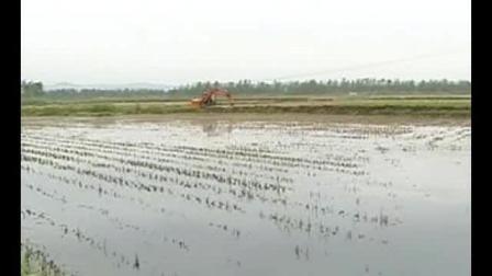 小龙虾养殖前景 小龙虾高产养殖技术 养殖视频教学