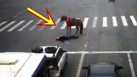 """小伙骑着骏马嚣张闯红灯, """"马走人凉""""的一幕被监控拍下!"""