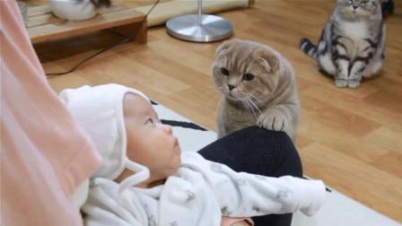 韩国温馨实验, 将婴儿放到五只猫咪中间会发生什么搞笑的事情?