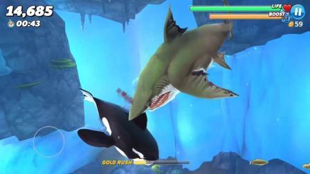 饥饿鲨世界: 杀人鲸会被巨齿鲨一口吃掉吗?