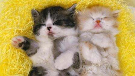 12星座最奇葩的睡姿是什么样的? 双子座满床打滚!
