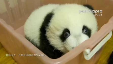 努力从粉框基尼中越狱的妮可宝宝~眼睛又大又圆超漂亮!