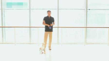 德牧入门训练视频 怎么训宠物狗 怎样训练狗不乱吃东西