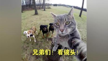 喵星人搞笑视频: 这是谁家的宠物猫咪成精了, 萌宠猫咪搞笑精选