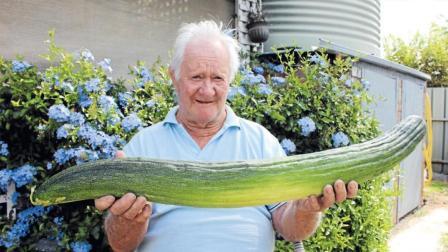 世界上最长的黄瓜! 网友: 一个星期吃不完!