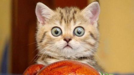 养猫就是用来搞笑的!