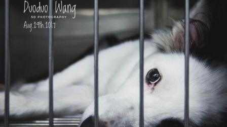 【记号分享】2018春节·宠物寄养·四川绵阳