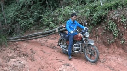 农村小伙开摩托车上山拉竹子, 4根竹子拉着就跑, 省时省力!