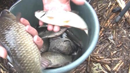 钓鱼要赶早, 钓满一桶鲫鱼就回家
