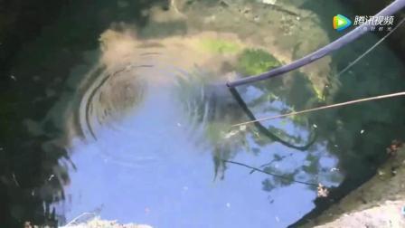 钓鱼: 男子在水井里试一试钓鱼, 没想到几十斤的大鱼上钩了!