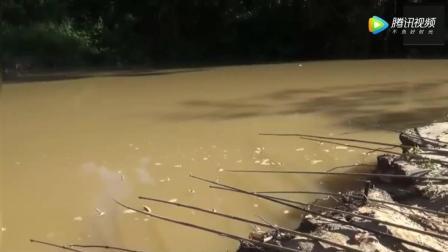 钓鱼: 男子带十几支竹竿去钓鱼, 上鱼后彻底傻眼了!