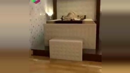 有这样的床, 地震就不可怕了