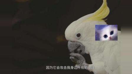 中国最霸道母鹦鹉! 把驯养员当老公, 攻击所有亲近主人的女性!