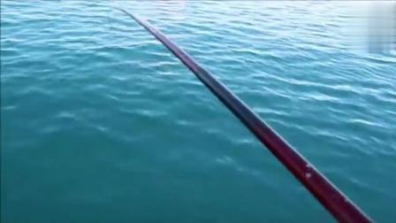 海钓: 阿波漂忽地就不见了! 赶紧扯动鱼竿