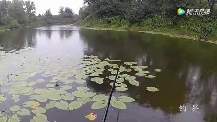 钓鱼: 下着小雨钓鱼, 鱼口好到不行, 今天不爆护不回家!