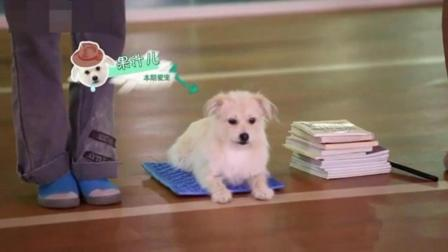 小狗夜里乱叫怎么办 拉布拉多幼犬如何训练 一岁金毛不听话怎么办