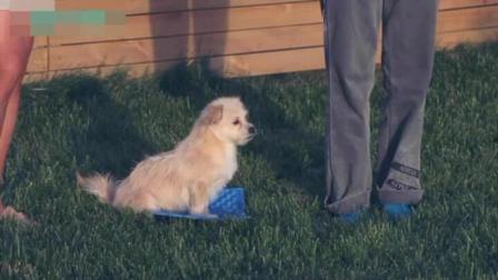 8个月拉布拉多喜欢咬人 怎么样训狗狗 怎么训练金毛叫