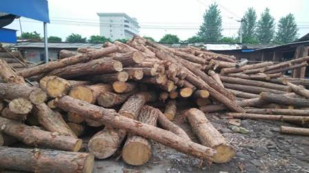 为什么很多人去农村收杂木, 到底用来做什么? 说出来你都不敢相信