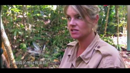 荒野求生: 夫妻档探险捉到3斤多重的大蟒蛇, 这顿吃的真是顶呱呱