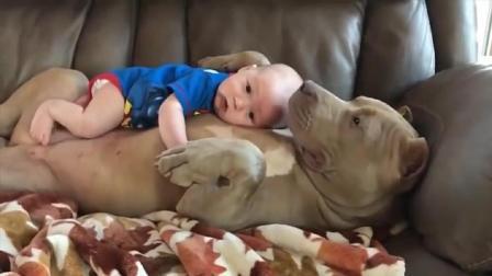 小主人出生以后, 家里的狗就成了保镖兼职保姆, 暖心