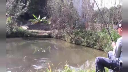 小伙用一条4米5的杆子, 连连收获大草鱼!