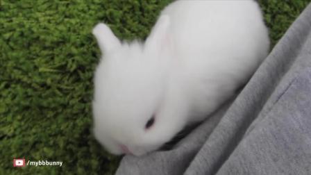 家里养了两只超萌的小兔子