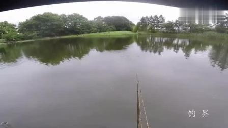 钓鱼: 鱼竿旁边都有鱼, 这么好的钓点上哪找去!