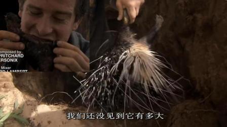 贝爷在非洲部落, 抓到豪猪, 烤了吃!