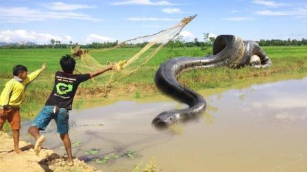 农村男孩小河边撒网捕鱼, 突然河对岸杀出一条大蟒蛇, 好吓人