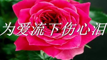 网络热门流行歌曲《为爱流下伤心泪》, 听到泪水