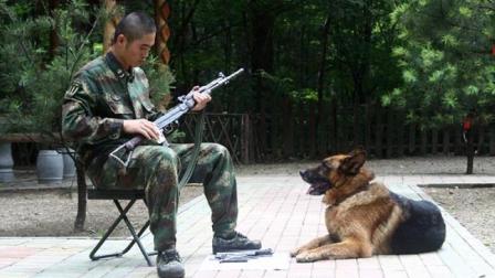 男子复员离开部队, 两只军犬的举动, 让他泪洒现场!