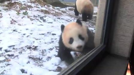 熊猫麻麻和熊猫宝宝在动物园玩的好开心