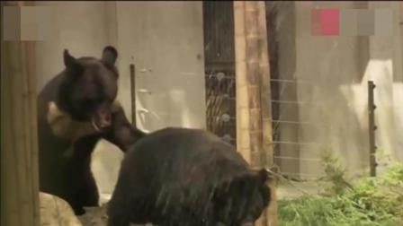 人类反思: 母穷被取胆汁, 含泪杀死亲生小熊