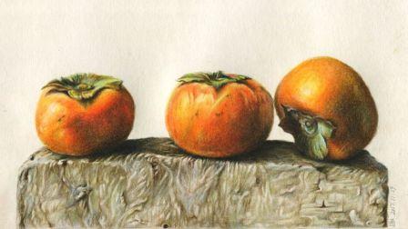 彩铅画基础教程— 超写实柿子1