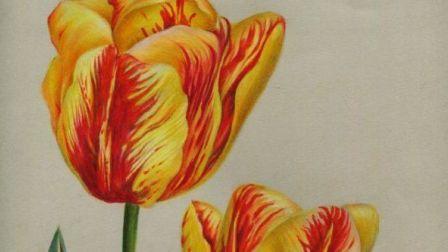 【艺达】彩铅零基础快速入门花卉教程-超写实郁金香 上