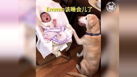 主人不在家汪星人尽心尽力的照顾小宝宝, 摇啊摇, 摇到外婆桥