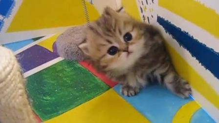 这是谁家的小猫咪, 长得这么可爱是要被吸的!