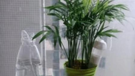 用塑料瓶就可以制作成自动浇花器, 学到就是赚到哦, 太实用了